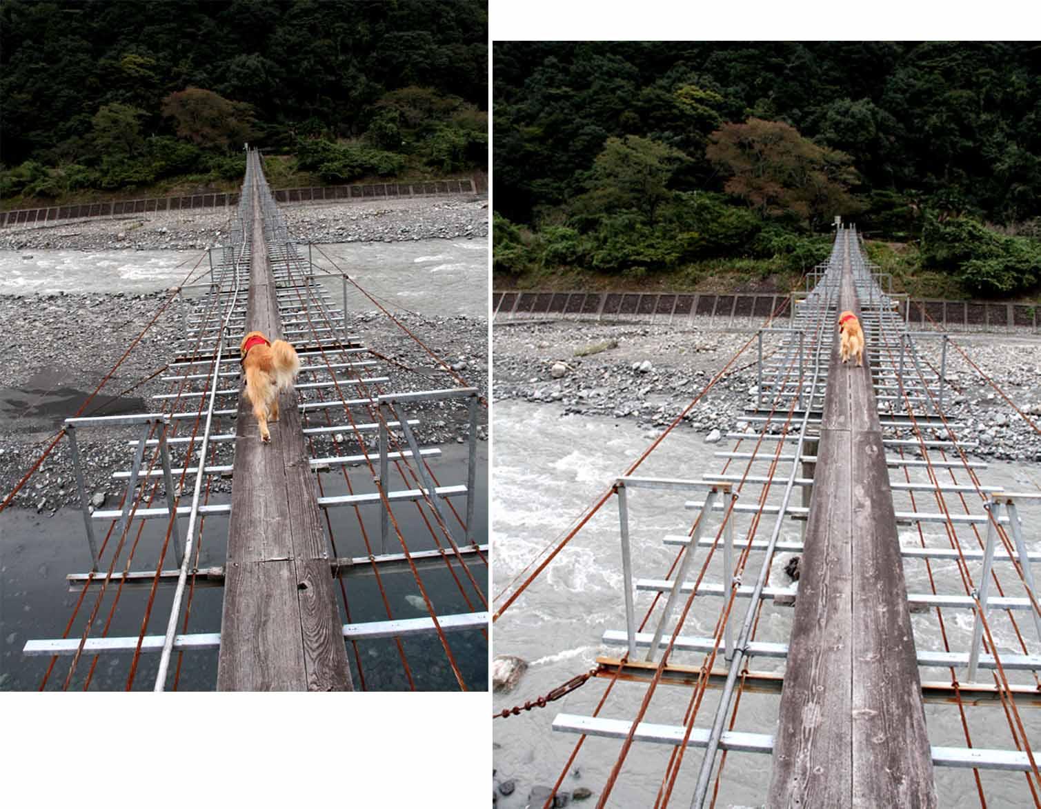 吊り橋ツアー(26)