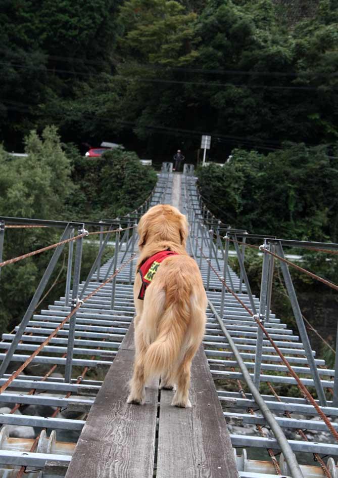 吊り橋ツアー(33)