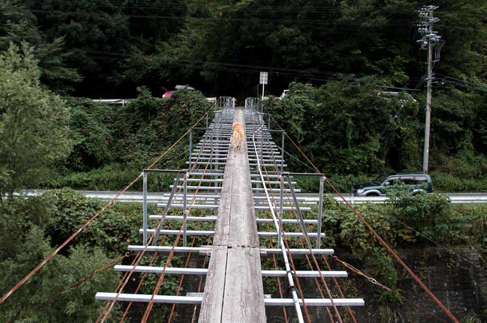 吊り橋ツアー(34)