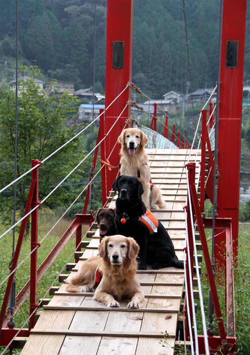吊り橋ツアー(36)