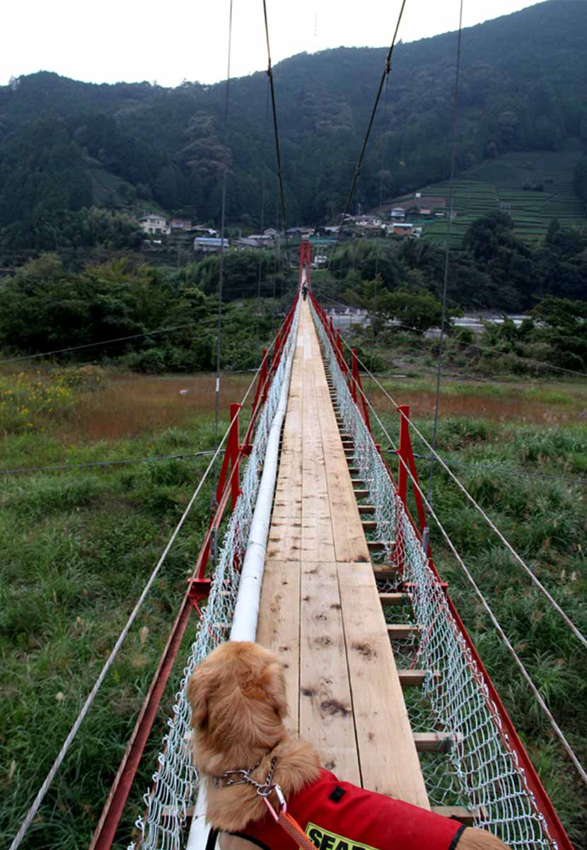 吊り橋ツアー(37)