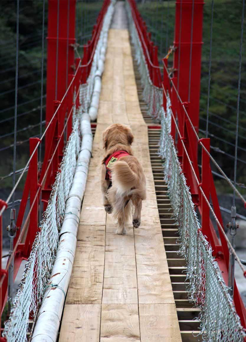 吊り橋ツアー(38)