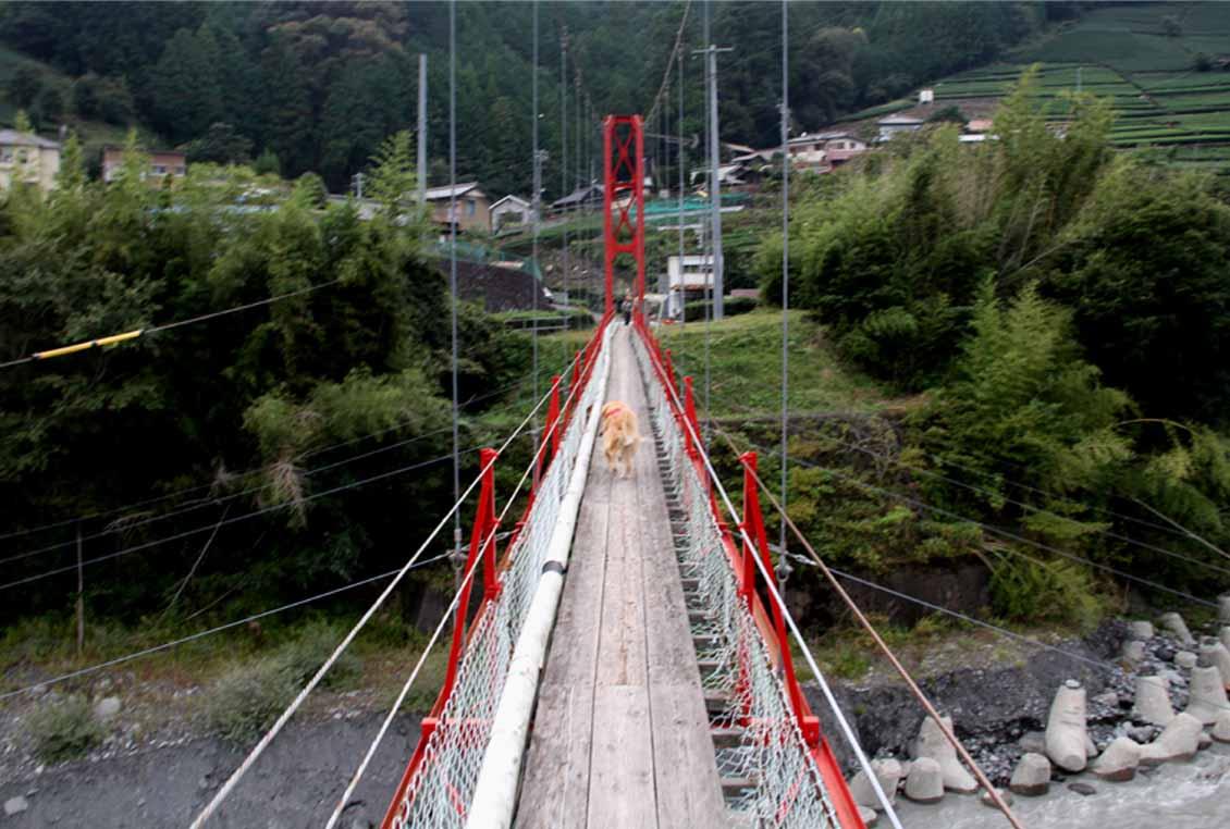 吊り橋ツアー(39)
