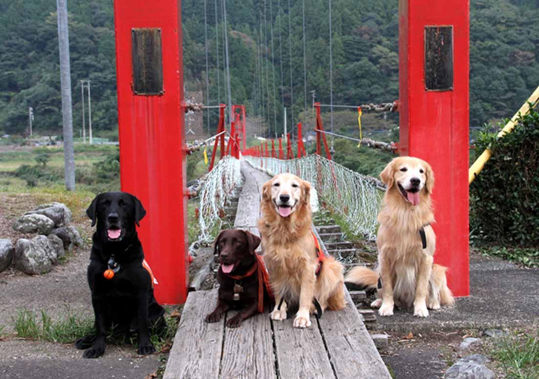 吊り橋ツアー(40)