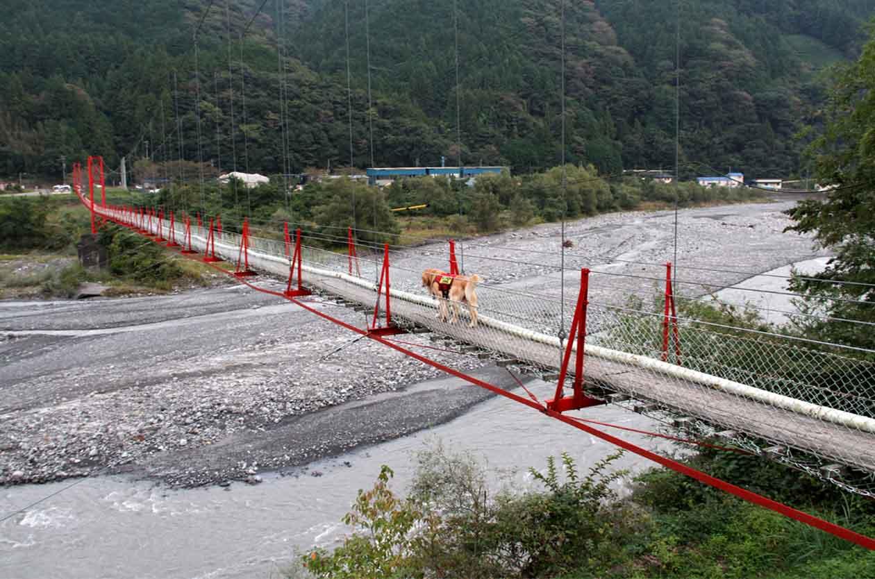 吊り橋ツアー(45)