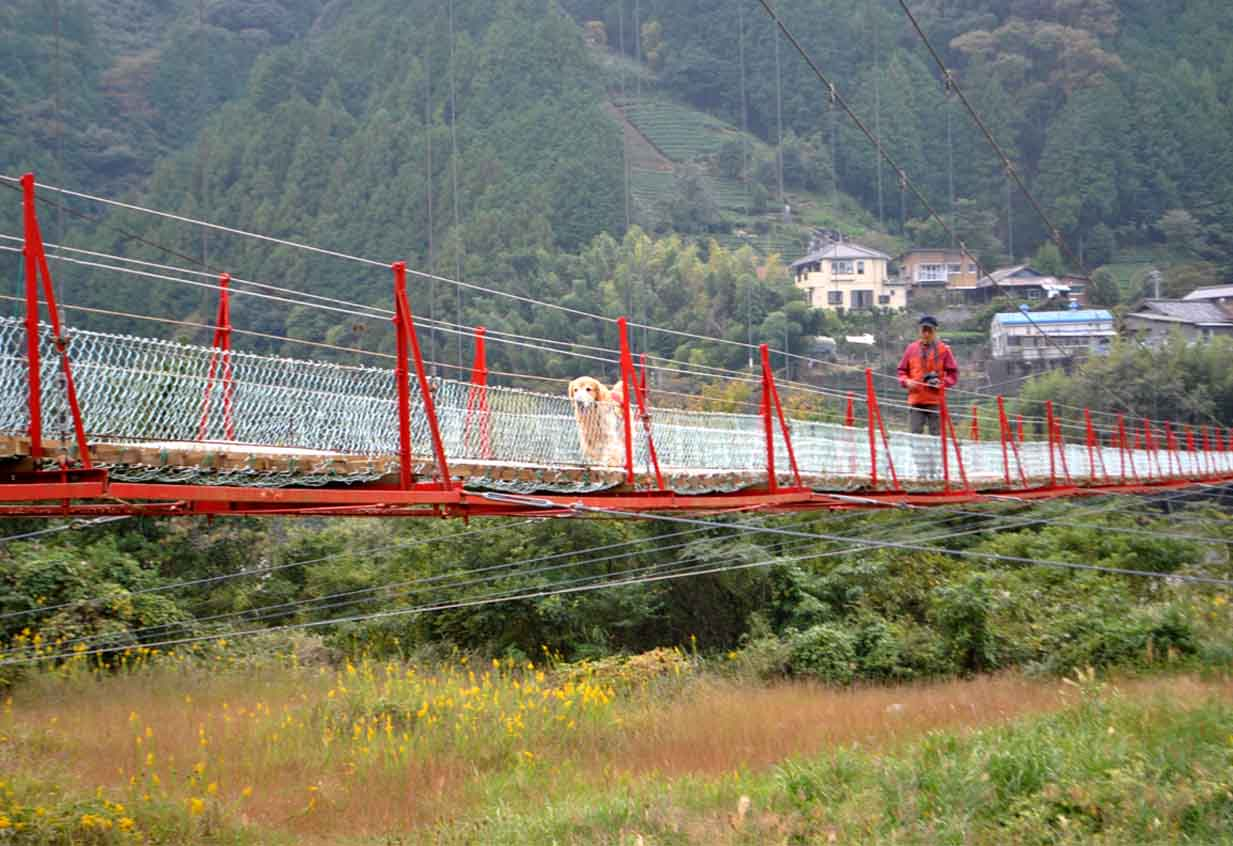 吊り橋ツアー(46)