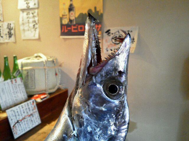 太刀魚0123