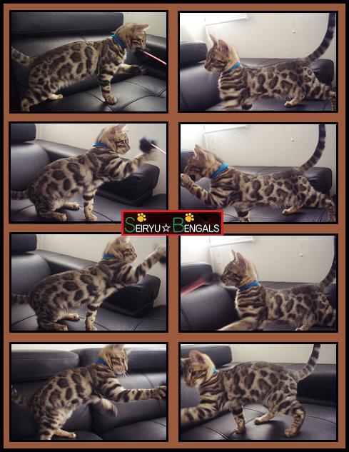 2013 SH kitten3