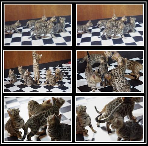 2013 kitten 7