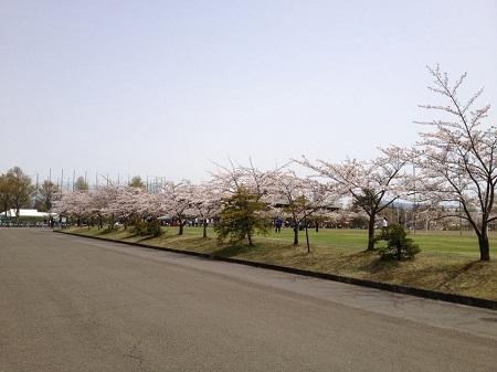 2012-04-28.jpg
