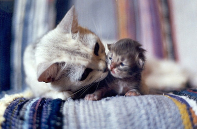 mother,cute,cat,cats,animal