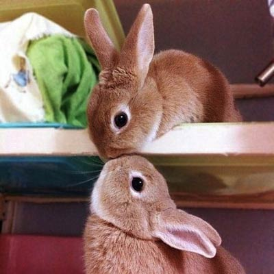 Bunny2_large.jpg