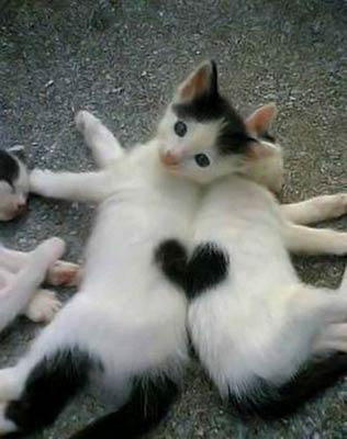 cat-heart-3.jpg