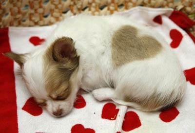 puppy_heart1.jpg