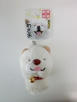 わさおブサかわ犬秋田犬鯵ヶ沢