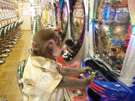 pachinko_monkey