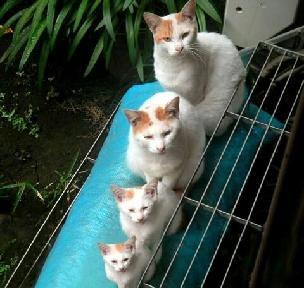 猫の三世代