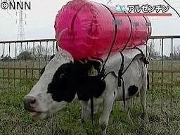 牛のゲップ