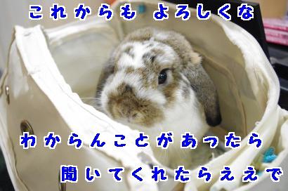 IMGP4102_convert_20120701183132.jpg
