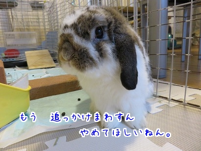 IMG_0898.jpg