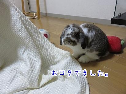 IMG_1465.jpg