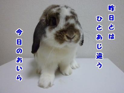P1110146_convert_20120503215520.jpg