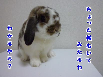 P1110148_convert_20120503215804.jpg