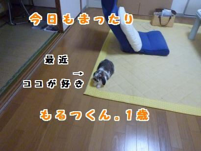 P1110162_convert_20120506100836.jpg