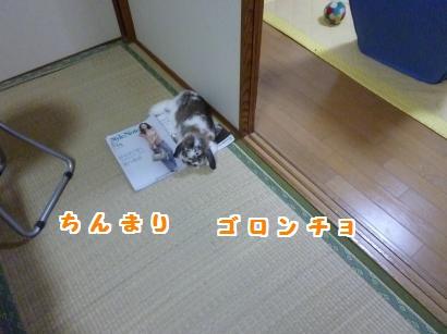 P1110178_convert_20120510210339.jpg