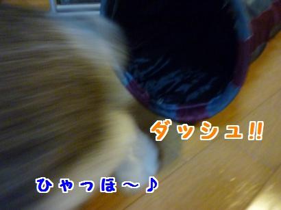 P1110198_convert_20120508181325.jpg