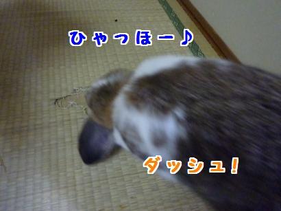 P1110215_convert_20120510205731.jpg