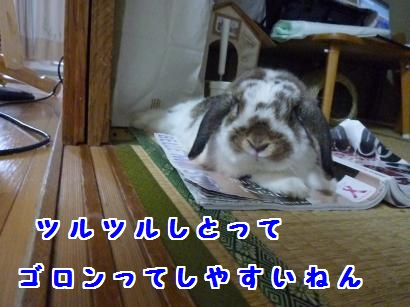 P1110434_convert_20120527192724.jpg