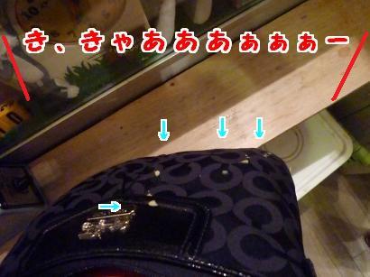 P1110464_convert_20120602213707.jpg