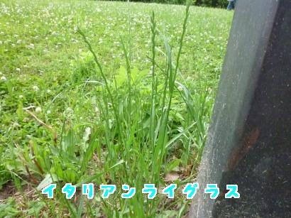 P1110513_convert_20120603175734.jpg