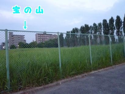 P1110571_convert_20120607221006.jpg