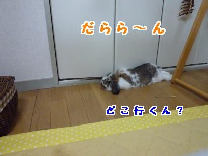 P1110651_convert_20120617192721.jpg