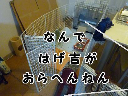 P1110808_convert_20120702213716.jpg