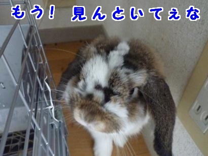 P1110860_convert_20120707094950.jpg