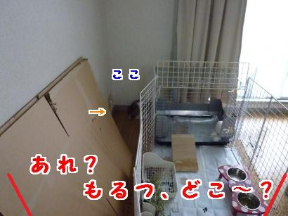 P1110866_convert_20120707094411.jpg