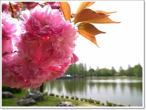 2012-04-25 川越水上公園 022