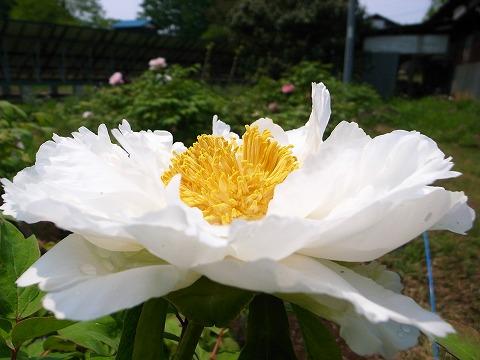2012-05-10 新しき村 005