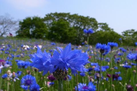 2012-05-10 安比奈親水公園 010