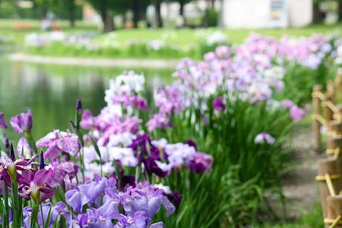 川越水上公園 017
