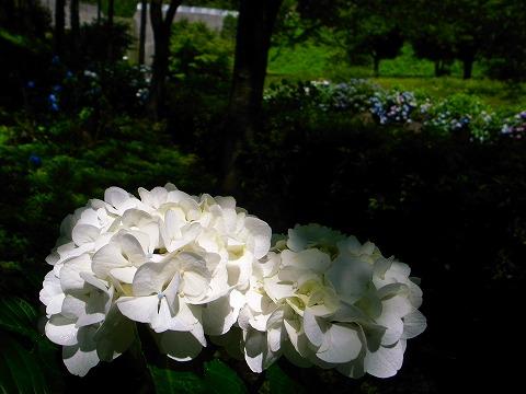 2012-07-04 雀川砂防ダム 022