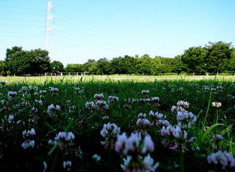 2012-07-04 川越水上公園 013