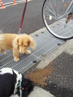 fc2blog_201211031351143f0.jpeg