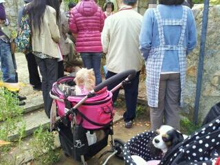 fc2blog_2012111118165457e.jpg