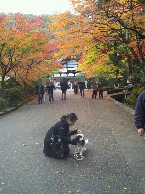 fc2blog_2012112423583733d.jpg