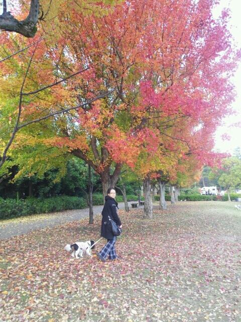 fc2blog_201211250111292e1.jpg