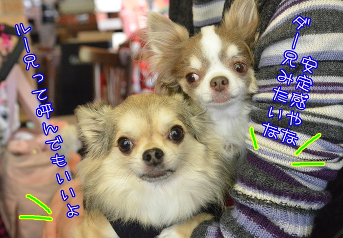 DSC_8114_20141205133628071.jpg
